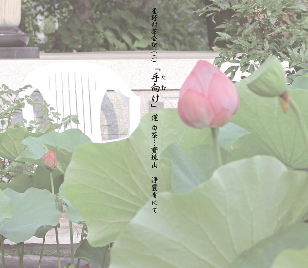 H.V-2(星野村茶会記(二)『手向け』蓮 白茶 浄圓寺)