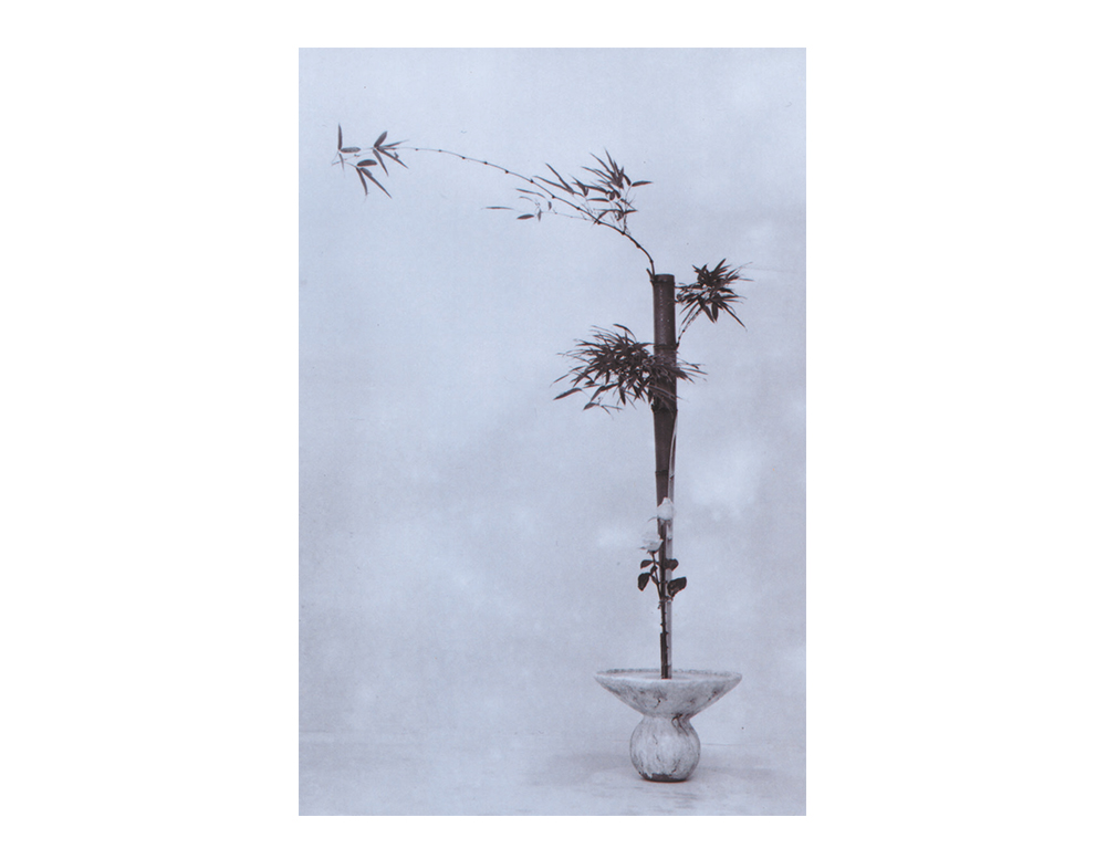 W-6(Winds 06)